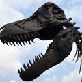 Dinozaur mógł zginąć od nowotworu złośliwego? Ciekawe odkrycie naukowców