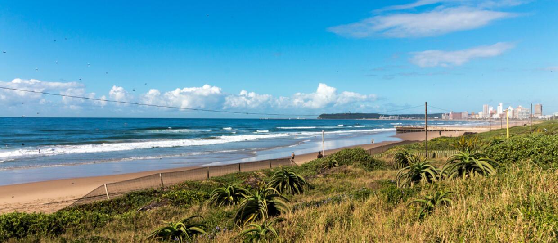 Gigantyczna kałamarnica na plaży w RPA