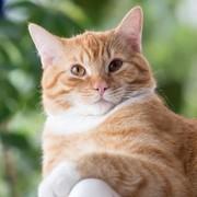 Kot zarażony koronawirusem? Pierwszy taki przypadek