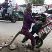 Małpa na rowerze porwała dziecko