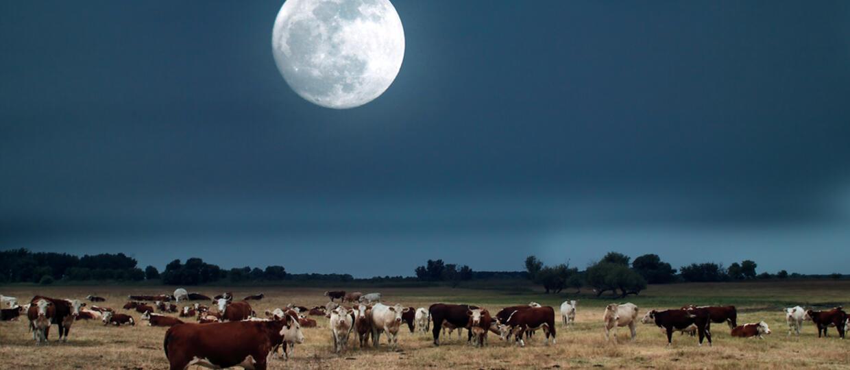 Mleczny Księżyc
