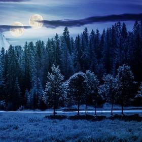 dwa księżyce nad lasem