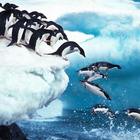 Konflikt w zoo. Para pingwinów-gejów ukradła jajo parce pingwinów-lesbijek