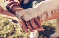 ludzkie ręce i łapa psa