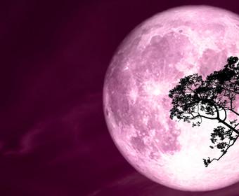 Różowy Księżyc pełnia