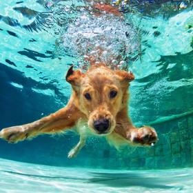 Tak się bawi najbardziej wyluzowany pies na świecie