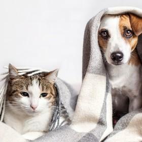 Foto: Shutterstock/ zdjęcie poglądowe