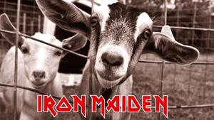 10 metalowych utworów w kozim wykonaniu