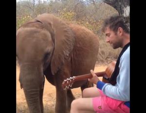 Damon Albarn znowu gra dla słonia Mr. Tembo