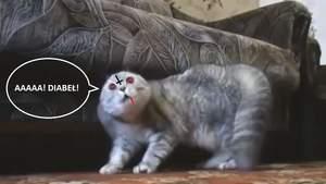 Koty z piekła rodem