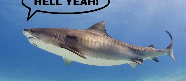 Rekiny też kochają metal!