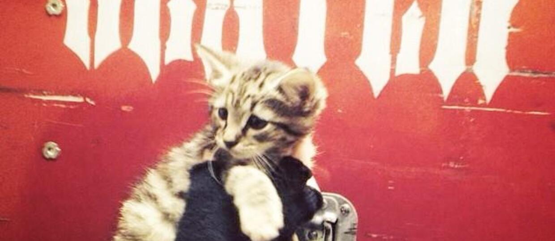 Slayer lubi koty. Z wzajemnością!