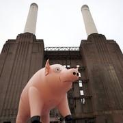 Świnia od Pink Floyd wystawiona na sprzedaż