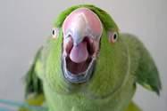 TOP 5 papug, które kochają metal