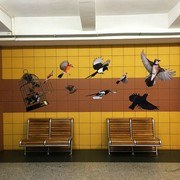 Ptaki Davida Gilmoura opanowały warszawskie metro