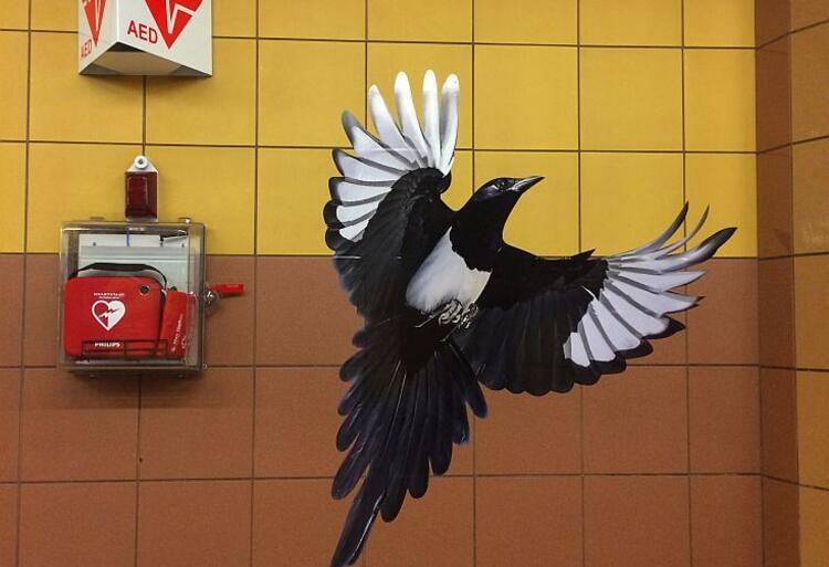 Jeden z ptaków z okładki płyty