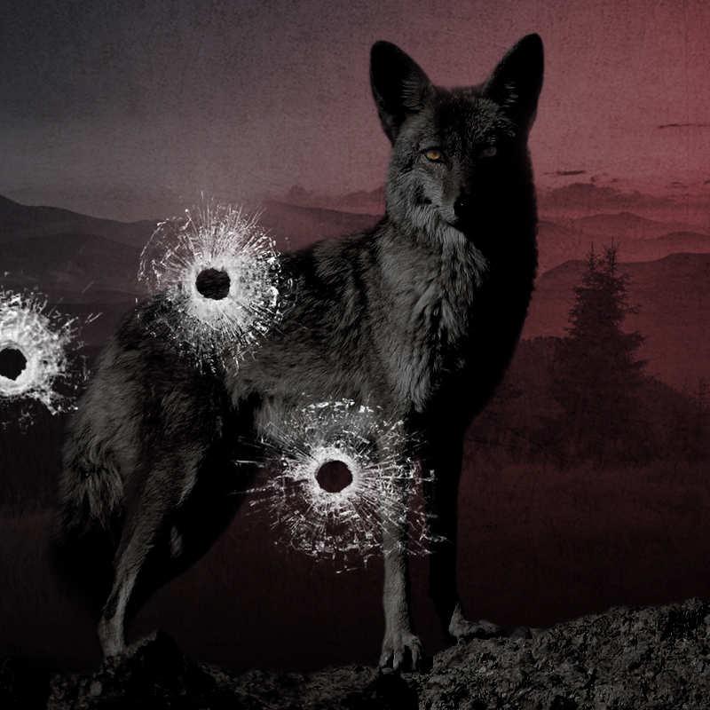 Ranking Kojota