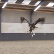Policyjne orły polują na drony