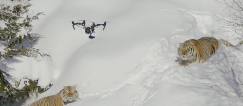 Czy tygrysy marzą o elektronicznych dronach?