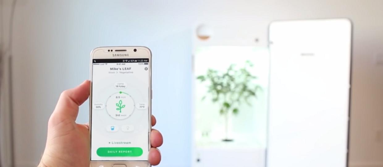 Domowa plantacja marihuany sterowana smartfonem