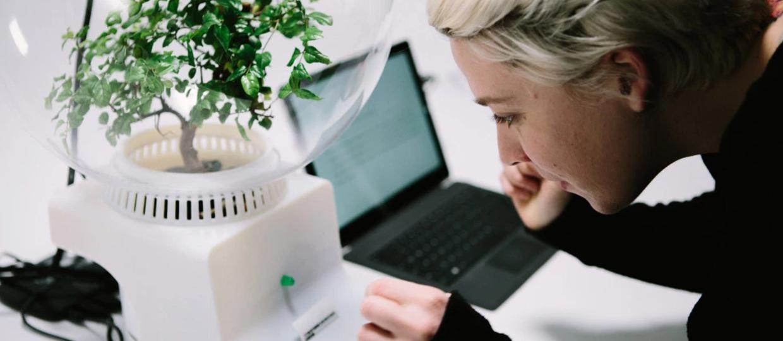 Microsoft uczy rośliny rozmawiać