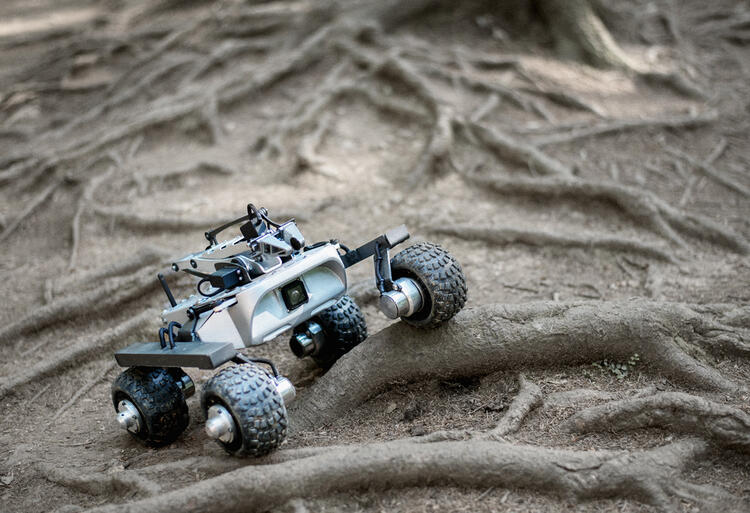rover-on-a-branch-2