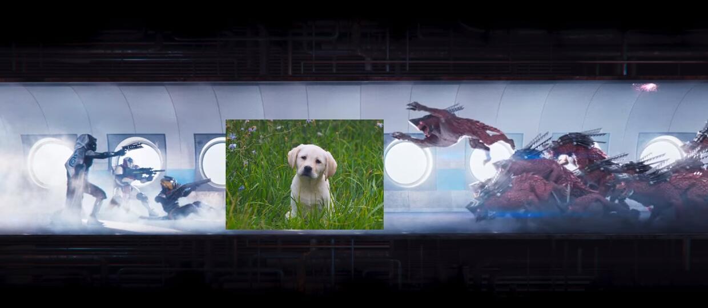 W Destiny 2 mścisz się za śmierć słodkich szczeniaczków