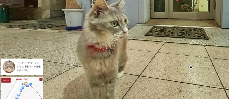 Cat Street View – zwiedzanie miasta w trybie kota