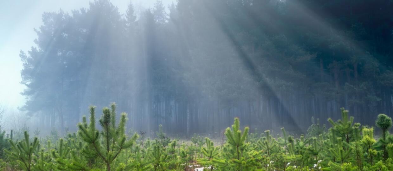 szkółka leśna